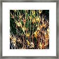 Cheat Grass 15750 Framed Print
