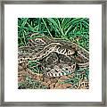 Checkered Garter Snake Framed Print