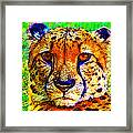 Face Of The Cheetah Framed Print