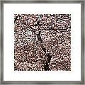 Cherry Blossom Trees In Potomac Park Framed Print
