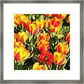Cherry Blossoms 2013 - 032 Framed Print