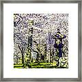 Cherry Blossoms 2014. Framed Print