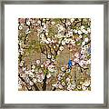 Cherry Blossoms And Blue Birds Framed Print