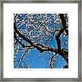 Cherry Blossoms And Sky Framed Print