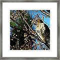 China Berry Hawk Framed Print