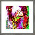Chinese Crested Dog 20130125v2 Framed Print