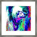 Chinese Crested Dog 20130125v3 Framed Print by Wingsdomain Art and Photography