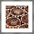 Chocolate Pecan Tarteletts Framed Print