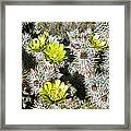 Cholla Flowers Framed Print
