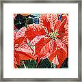 Christmas Poinsettia Magic Framed Print