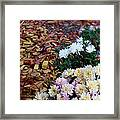 Chrysanthemums In The Forest Framed Print by Ioana Ciurariu