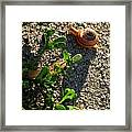 City Snail From Above Framed Print