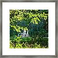 Clandestine Chair Framed Print by Jason Brow