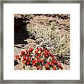 Claret Cups And Jug Handle Arch Framed Print