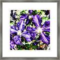 Clematis On A Stone Wall Framed Print