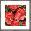 Close Up Of Delicious Strawberries Framed Print