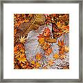 Close-up Of Fallen Maple Leaves Framed Print
