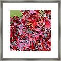 Close View Red Oak Leaves Framed Print
