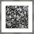 Cloudy Day For Young Magnolias Framed Print