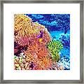 Clown Fish In Coral Garden Framed Print