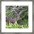 Coastal Deer Framed Print