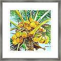 Coconut Series II Framed Print