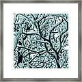 Cold Frosted Limbs Above Framed Print