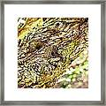 Collier-seminole Sp 12 Framed Print