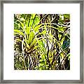 Collier-seminole Sp 19 Framed Print