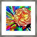 Color Extreme Framed Print