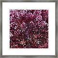 Color In The Tree 01 Framed Print
