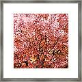Color In The Tree 03 Framed Print