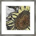 Color Me Sunflower Framed Print