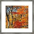 Colorfall Trees Framed Print