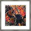 Colorful Autumn Grapes Framed Print