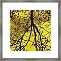 Colorful Branches Framed Print by Michael Sokalski