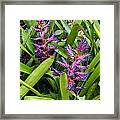 Colorful Bromeliad Framed Print