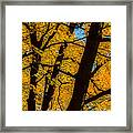Colorful Canopy Framed Print