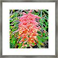 Colorful Exotic Framed Print