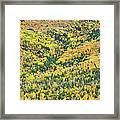 Colorful Fall Forest Near Rangeley Maine Framed Print