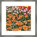 Colorful Flower Bed Framed Print