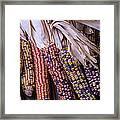 Colorful Indian Corn Framed Print