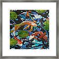 Colorful Koi Framed Print