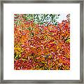 Colorful Leaves In Autumn Framed Print
