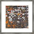 Colorful Moss Spots On A Gneiss Rock Framed Print