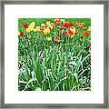 Colorful Spring Framed Print