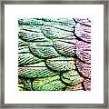 Colorful Wings Framed Print