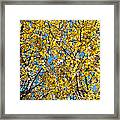Colors Of Autumn - Yellow - Featured 3 Framed Print