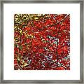 Colors Of Fall 3 Framed Print