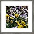 Colors Of Flower  Framed Print